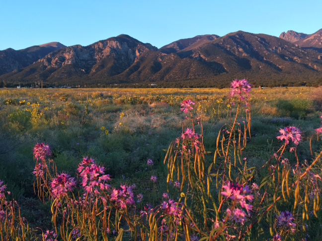 Crestone Mountains and Flowers